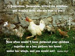 God-gathering like a hen